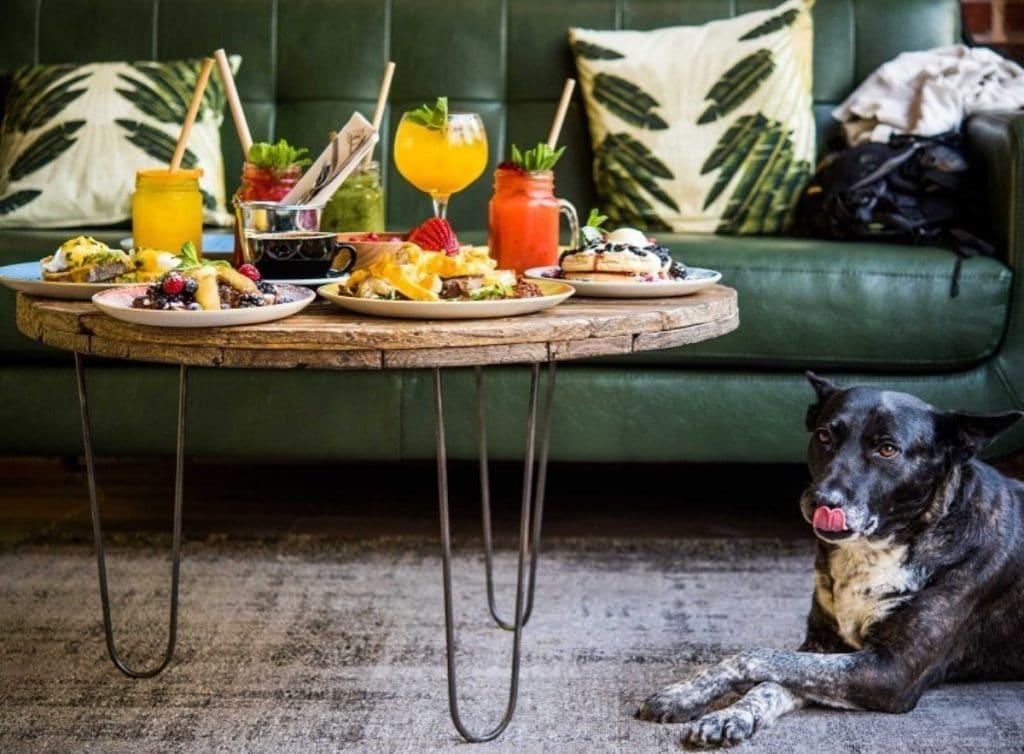 restaurantes pet-friendly