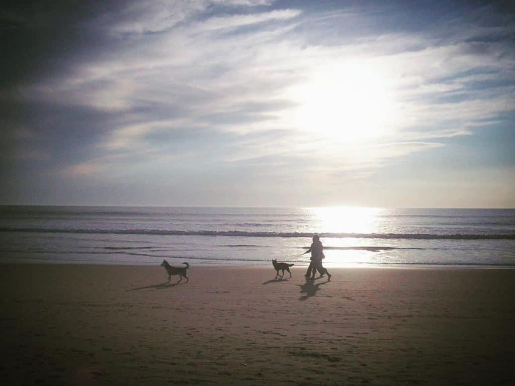 praias dog friendly em portugal