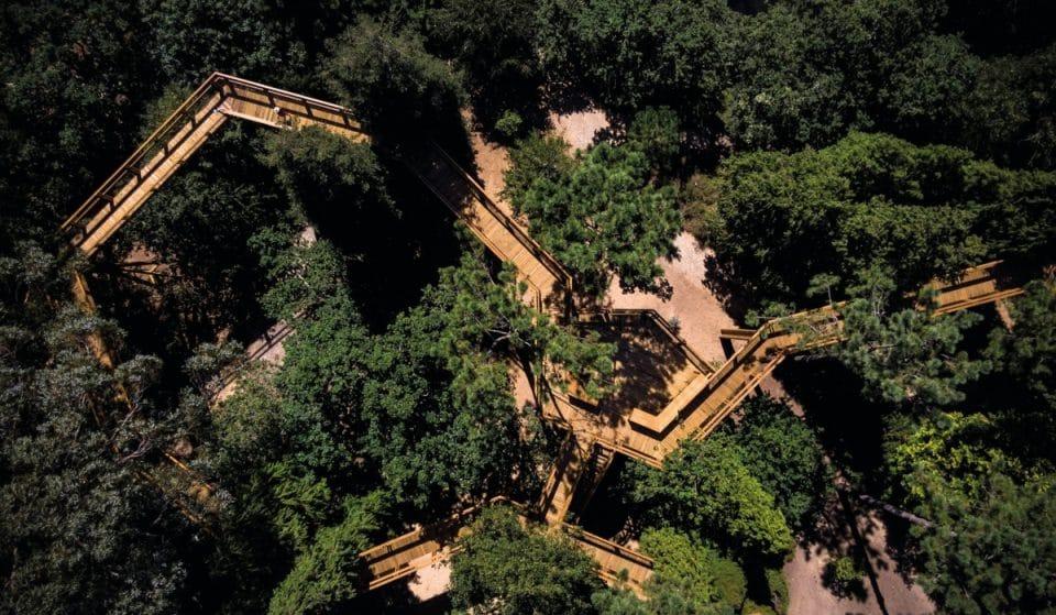 Parque de Serralves reabriu esta semana e o seu Treetop também