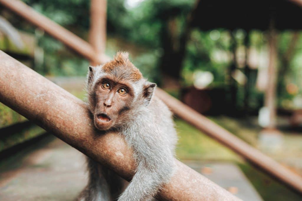 Estas fotos de animais selvagens vão tornar o teu dia mais alegre