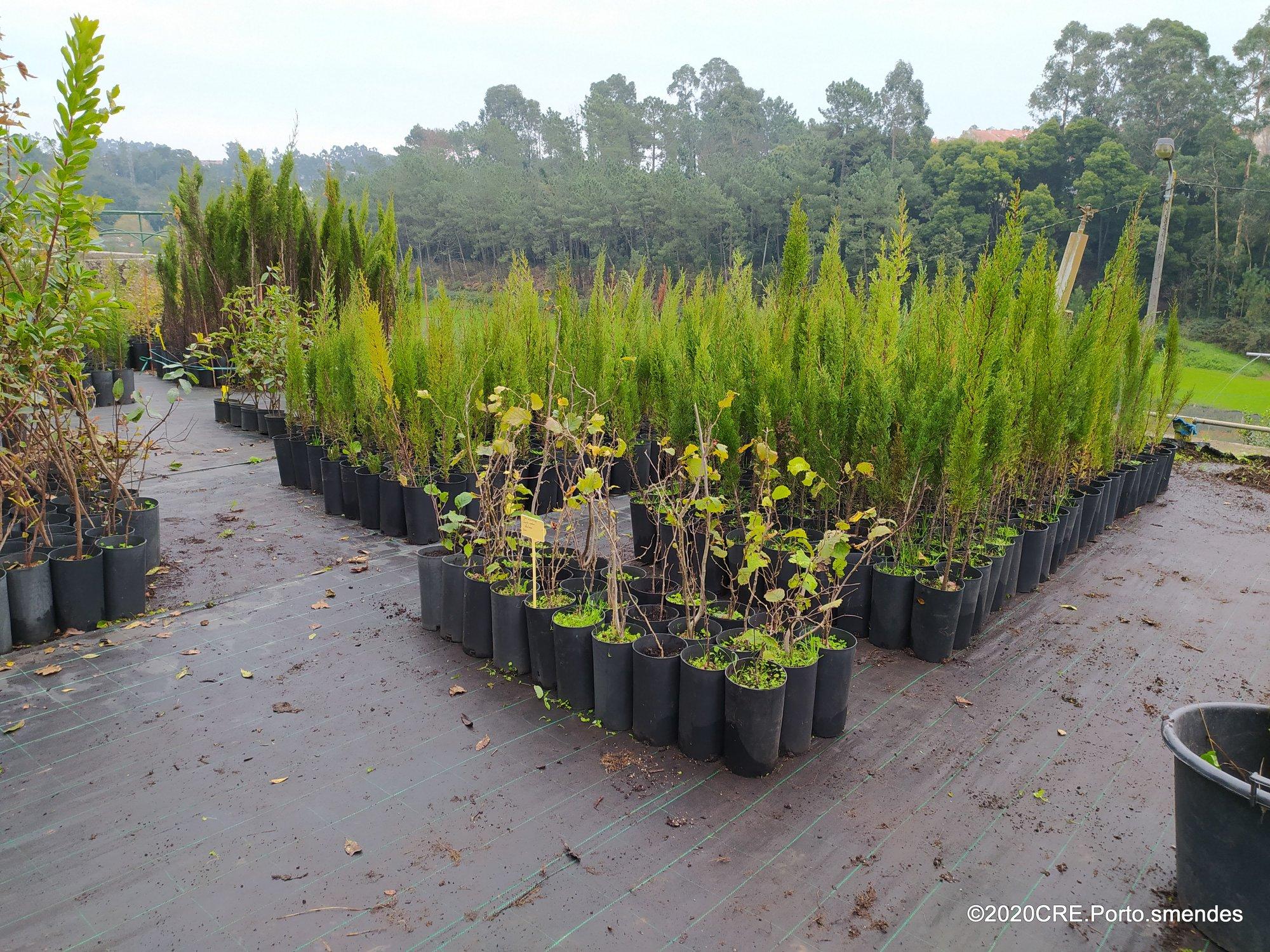 Projeto das 100.000 árvores