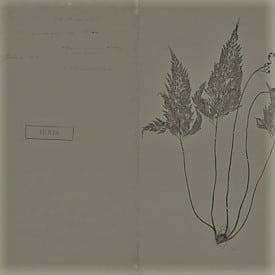 https://palavrasesentidos.blogs.sapo.pt/herbario-de-julio-dinis-198500