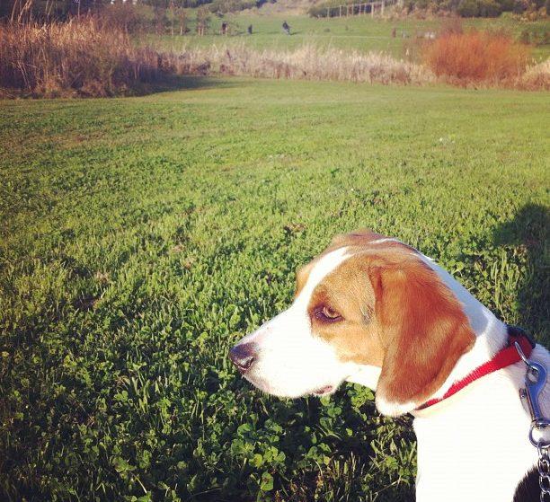 Dia Mundial do Cão: celebrar os cães no Porto