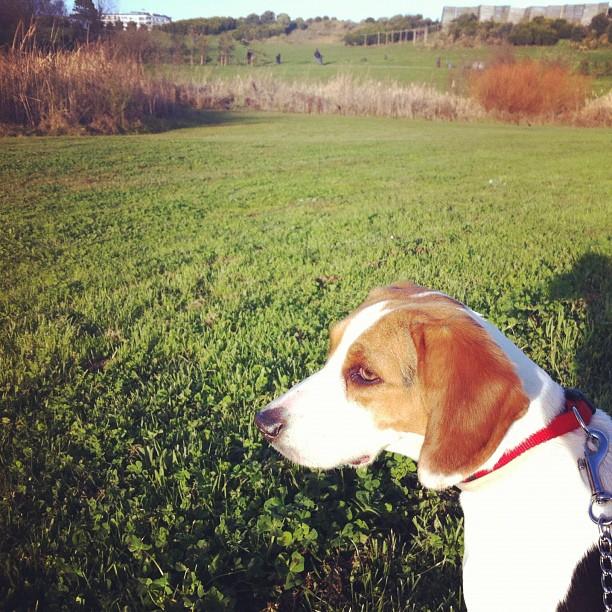 dia mundial do cão