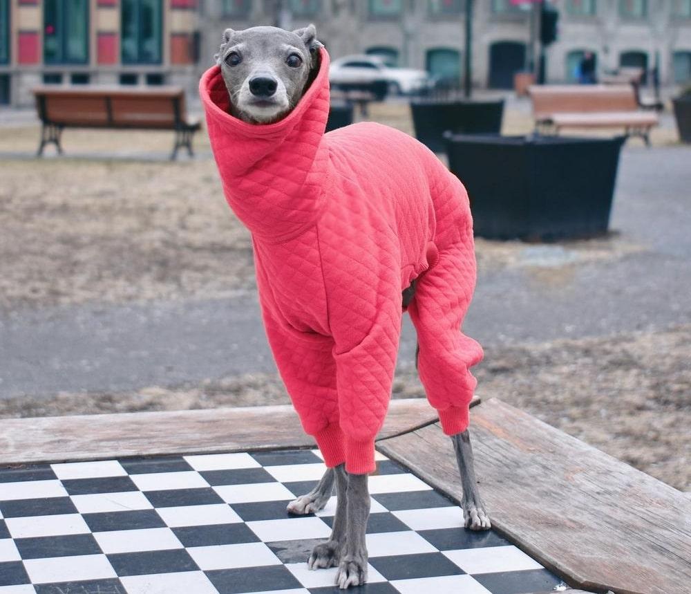 Alerte influenceur : Tika, le lévrier italien de Montréal, inspirera vos tenues de 2021 !