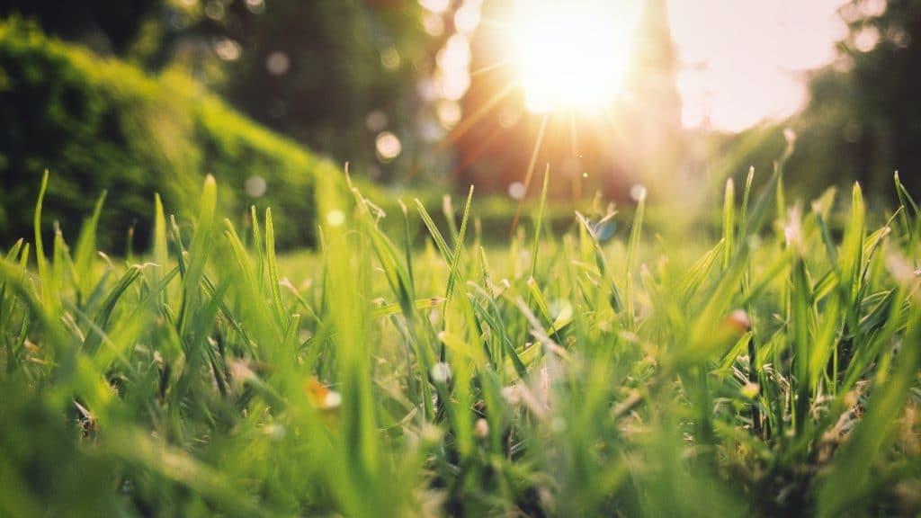 MétéoMédia prédit un printemps doux et un été chaud !