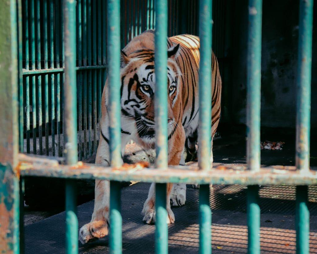Netflix annonce le retour de Tiger King pour une deuxième saison encore plus folle!
