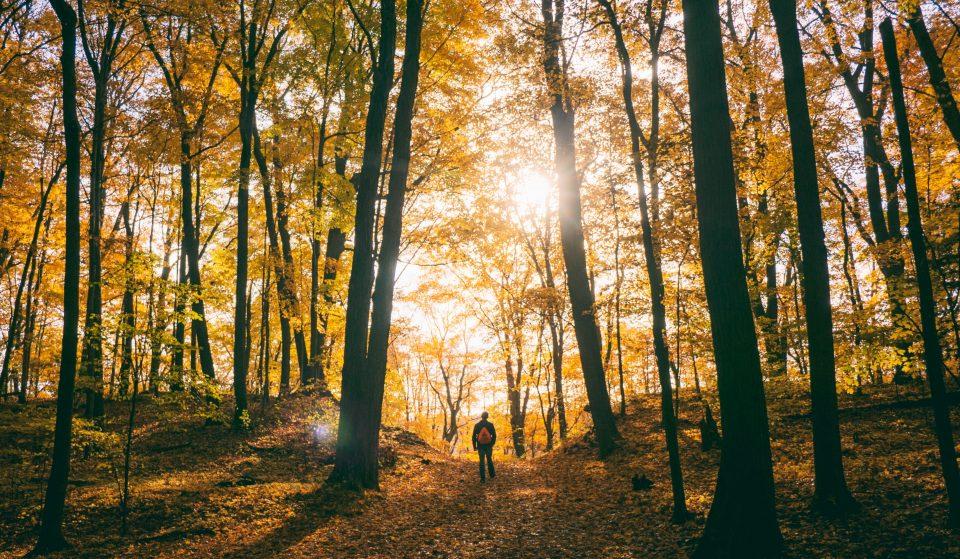 5 randonnées incontournables à faire cet automne au Québec