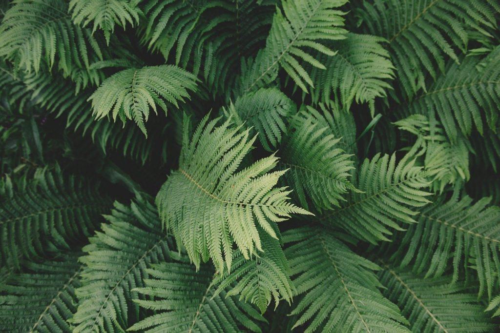 10 plantas que purificam o ar para você ter na sua casa