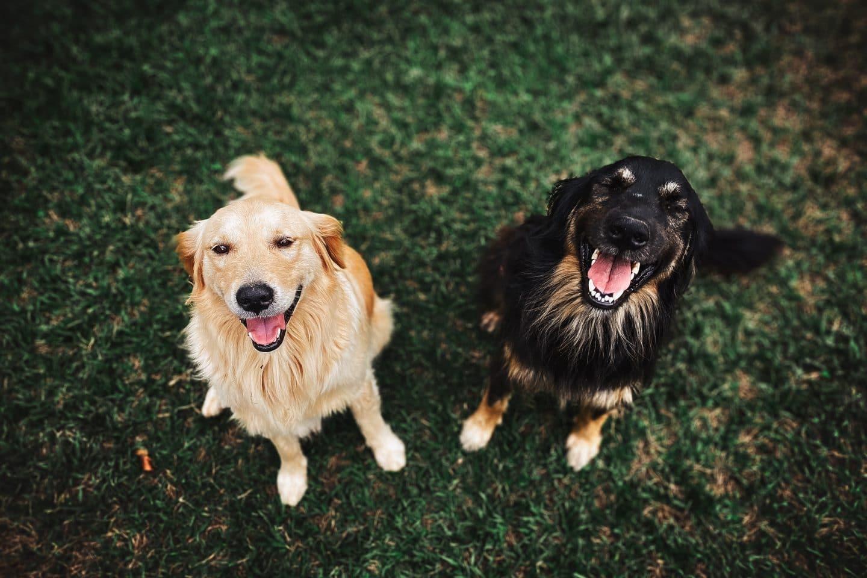 Os melhores cachorródromos para levar o seu pet