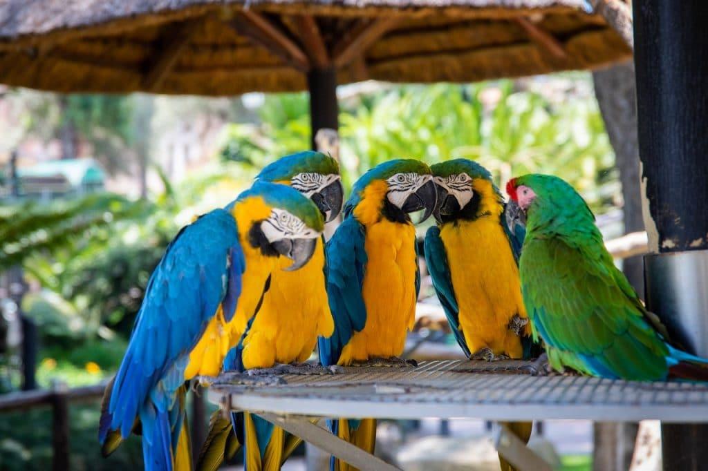 zoo-sao paulo-visita online