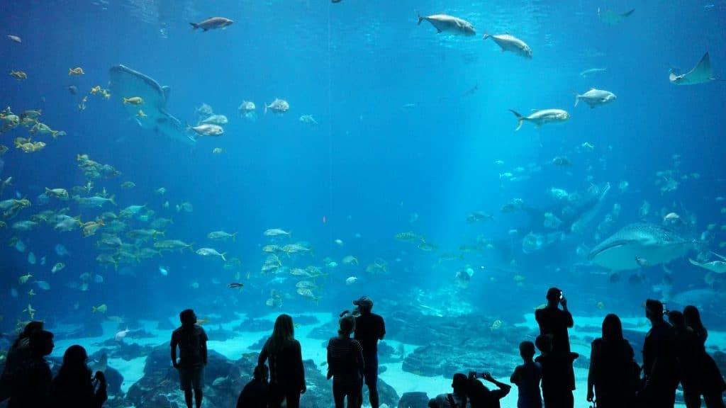visita virtual aquário de São Paulo