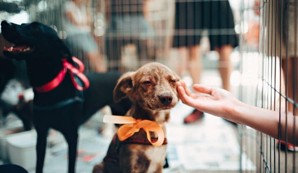 Conheça 7 locais para adotar um pet em SP