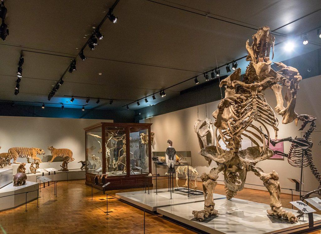 Museu_de_Zoologia_da_Universidade_de_São_Paulo
