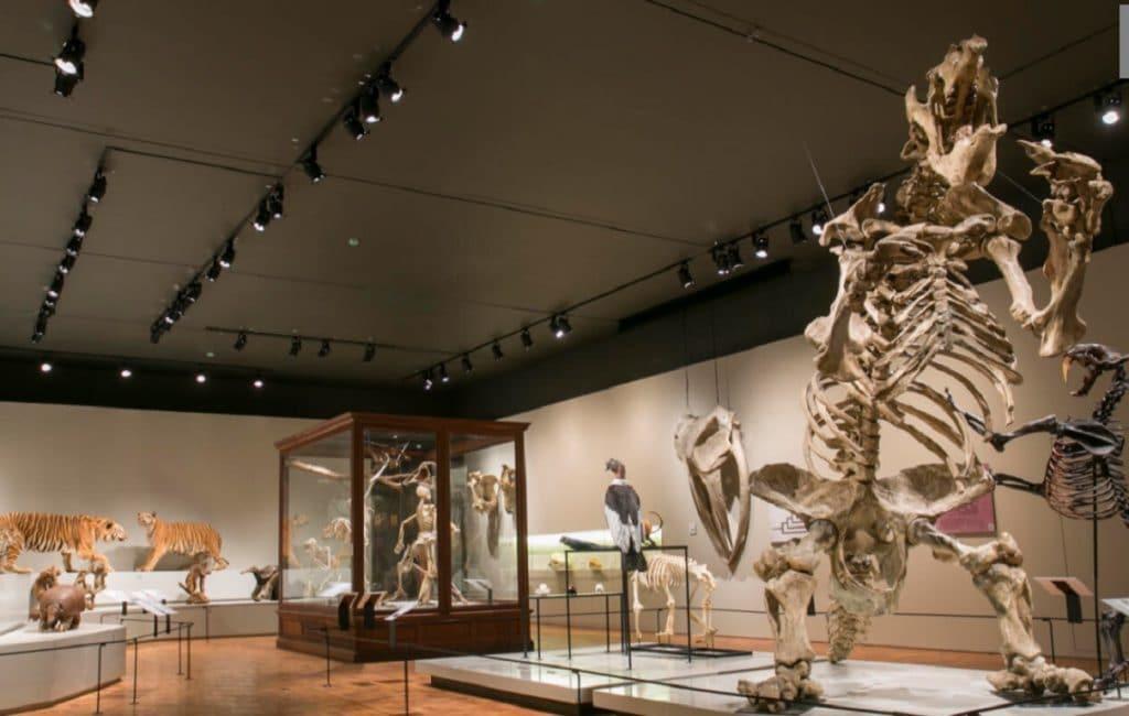 museu zoo usp