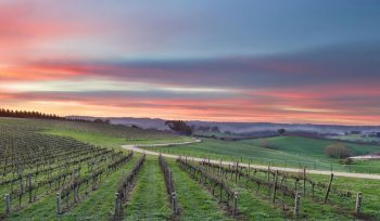 9 Wineries And Cellar Doors In The Adelaide Hills To Visit And Experience The Best The Region Has To Offer