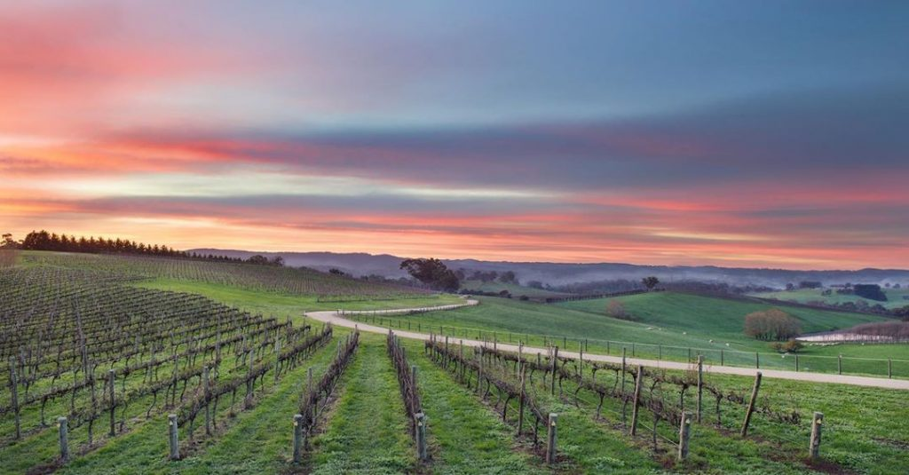 9 Wineries And Cellar Doors In The Adelaide Hills To Experience The Best Of The Region