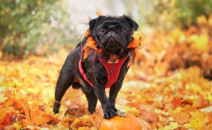 20 Of The Sweetest, Spookiest And Cutest Halloween Dogs Of 2020