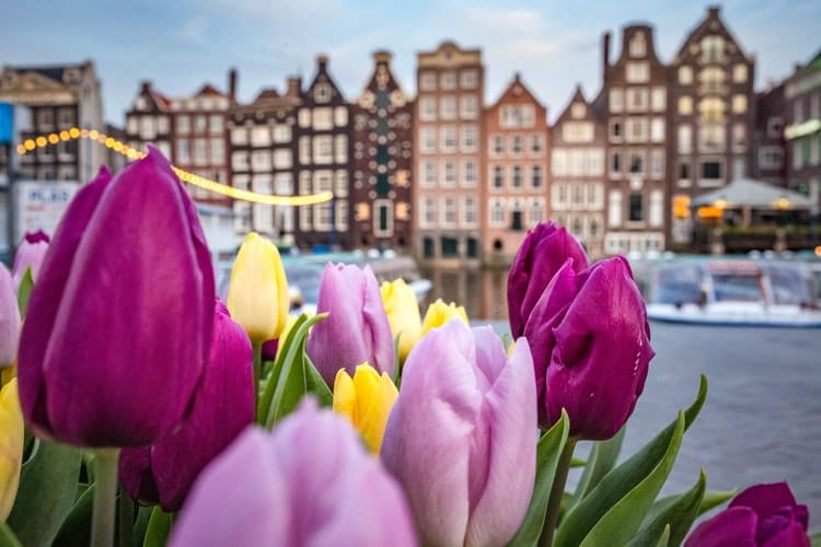 10 Gorgeous Photos Of Amsterdam's Tulips Because It's National Tulip Day