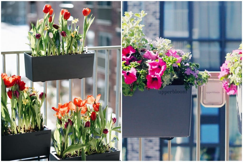 Make Your Balcony Bloom With A Lovely Planter Delivery • Upperbloom