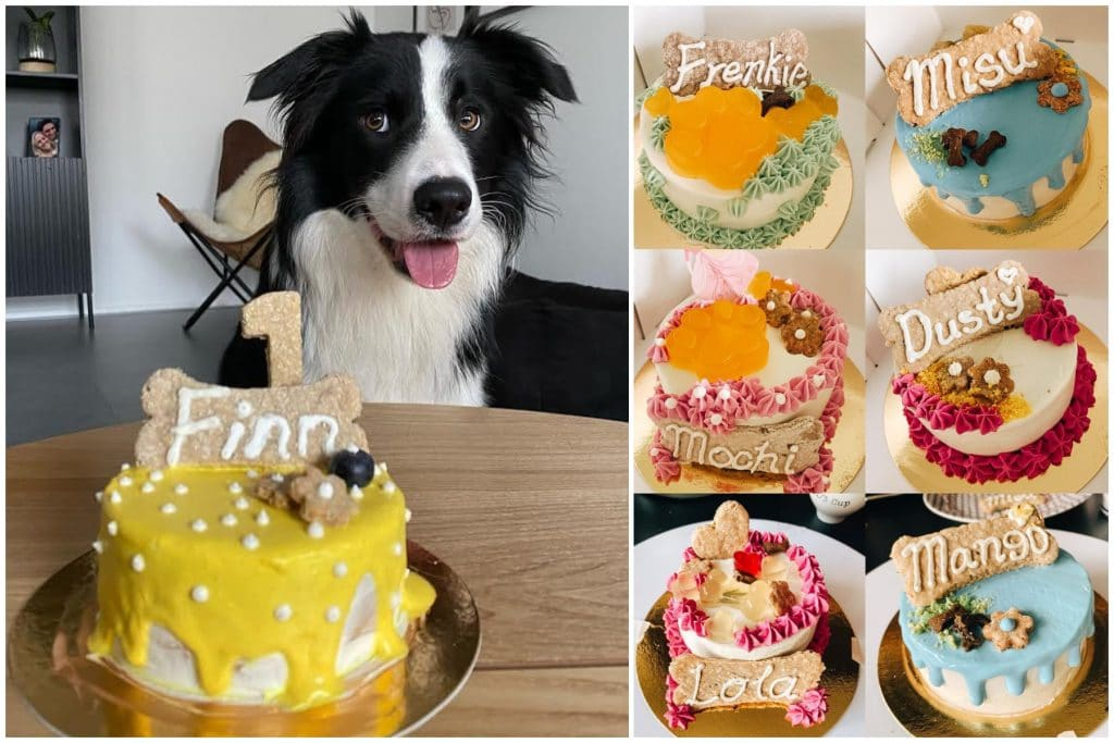 This Amsterdam Bakery Creates Pawfect Birthday Cakes For Dogs • Ciao Milton