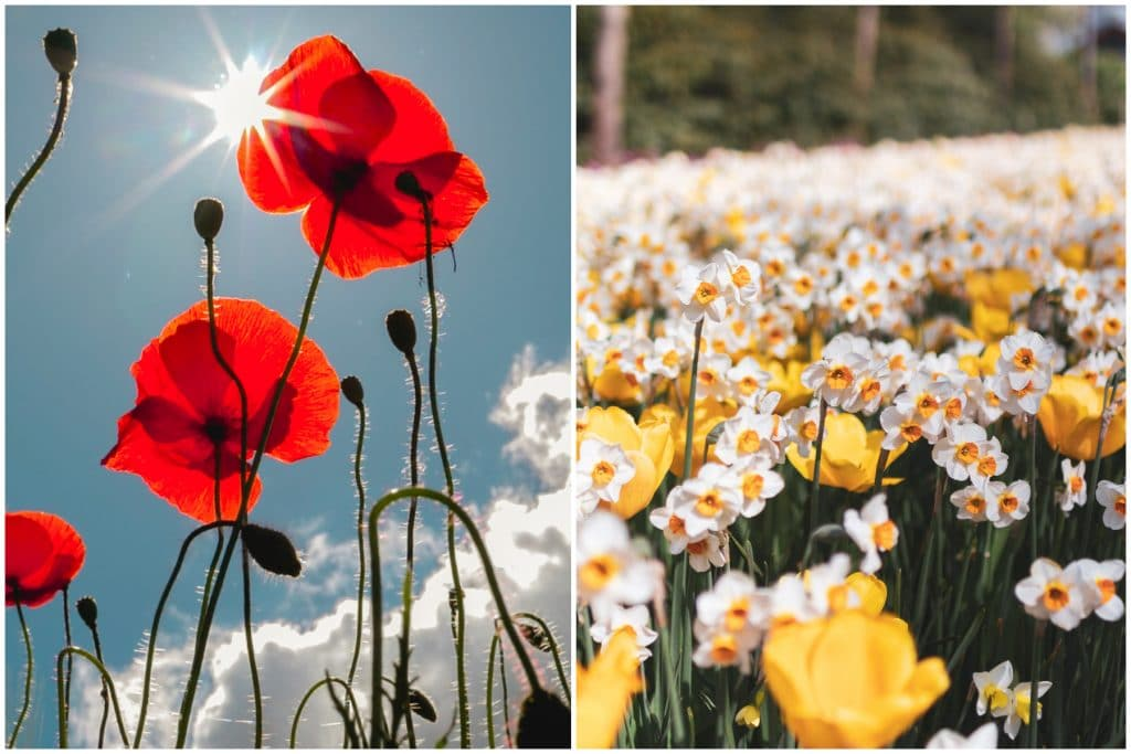 8 Spots To See Beautiful Flower Fields In The Netherlands And When To Visit