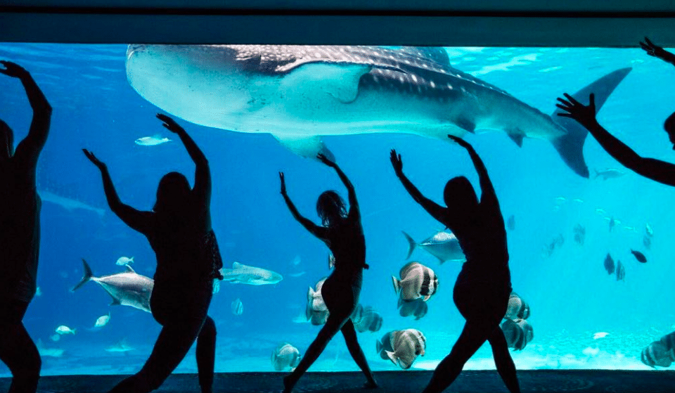 Do Yoga Among Stingrays And Whale Sharks At The Georgia Aquarium