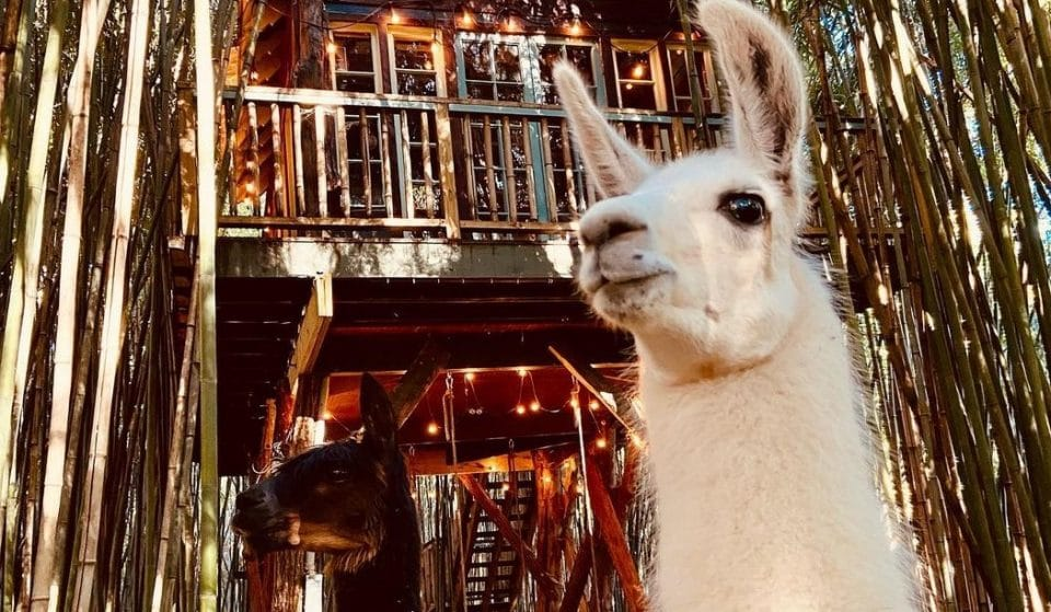 Wind Down With Llama Yoga In This Enchanting Treehouse In Atlanta