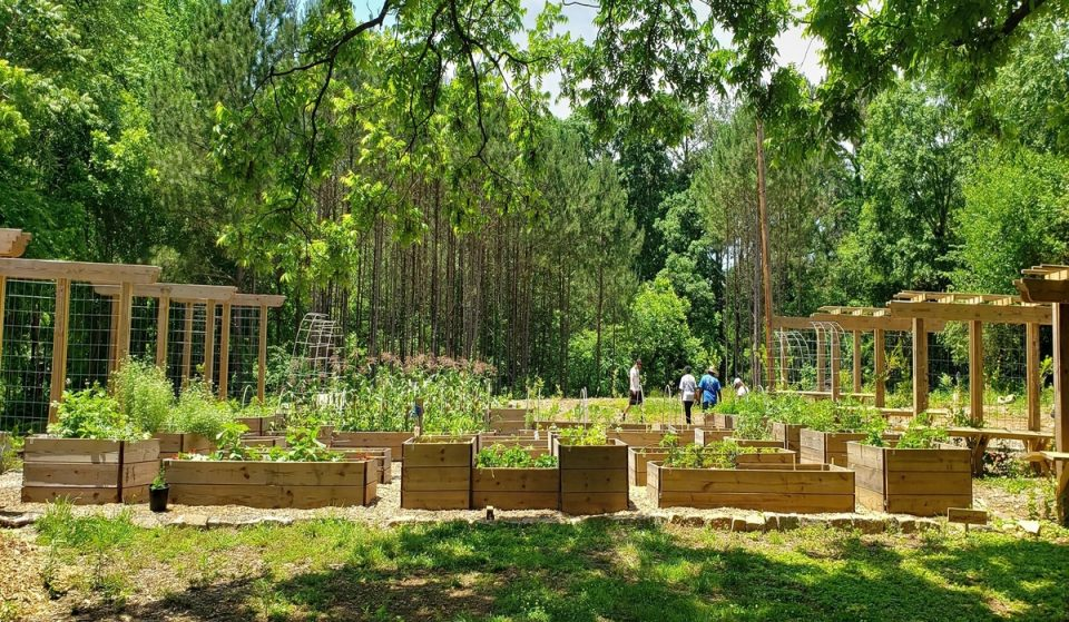 Atlanta's Home To The Nation's Largest Free Food Forest Tackling Food Insecurity