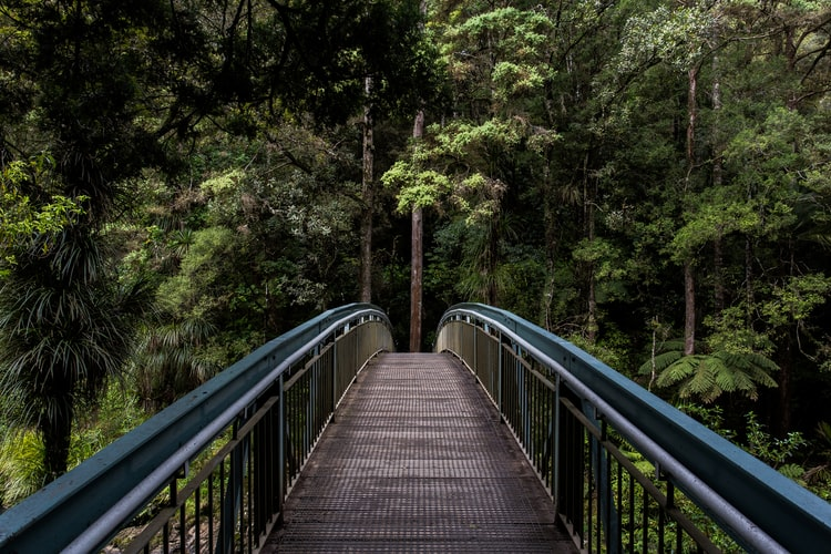 New Zealand Is Inviting The World To Plant Trees To Turn Their 2020 Disappointments Into 'Forest Of Hope'