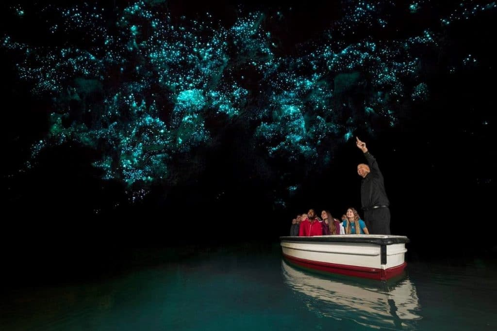 Best North Island Experiences