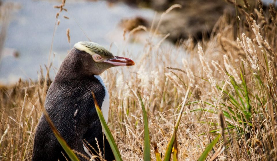 7 Unusual Animals Tourists Didn't Know You Could Encounter In New Zealand