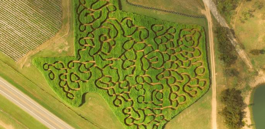 Get Lost In A Texas-Shaped Corn Maze In Marble Falls