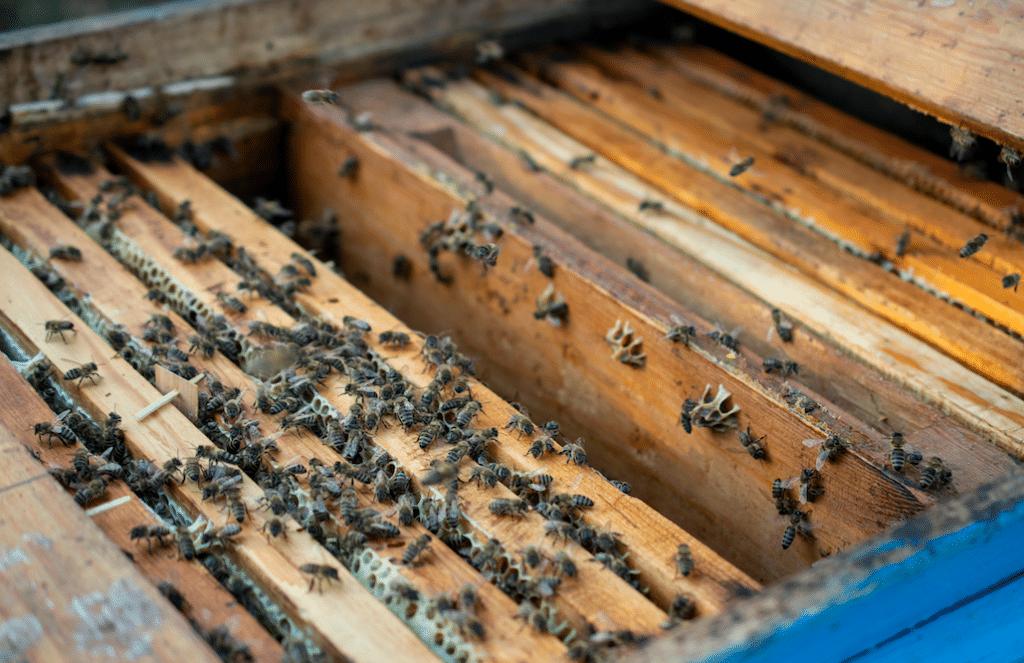 An 18-Wheeler Full Of Bees Flipped In San Antonio
