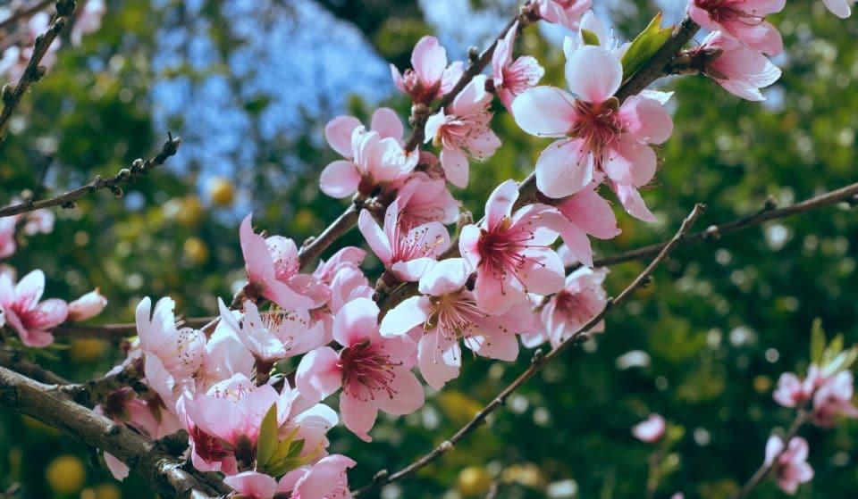 4 Orte, an denen ihr Berlins Kirschblütenbäume bestaunen könnt