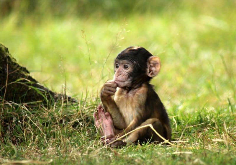 Walk Amongst Free-Roaming Monkeys At This Magical Forest Near Birmingham