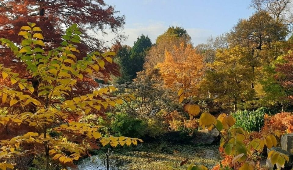 Literally Just 14 Photos of Birmingham Looking Awesome In Autumn