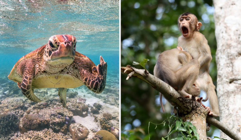 The Comedy Wildlife Photography Awards Has Released The Finalists Images And They're Hilarious