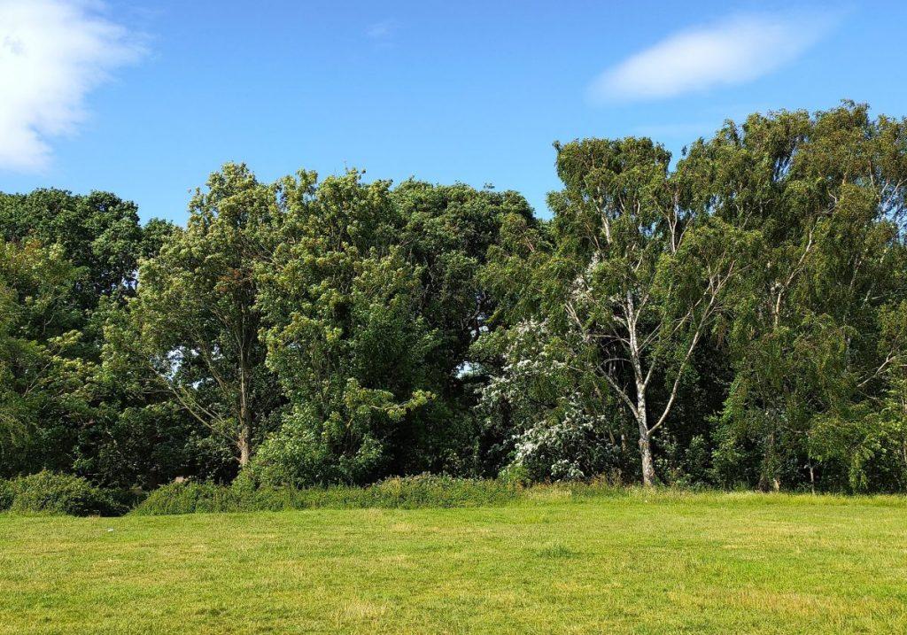 birmingham-woodland-walks-yardley-wood