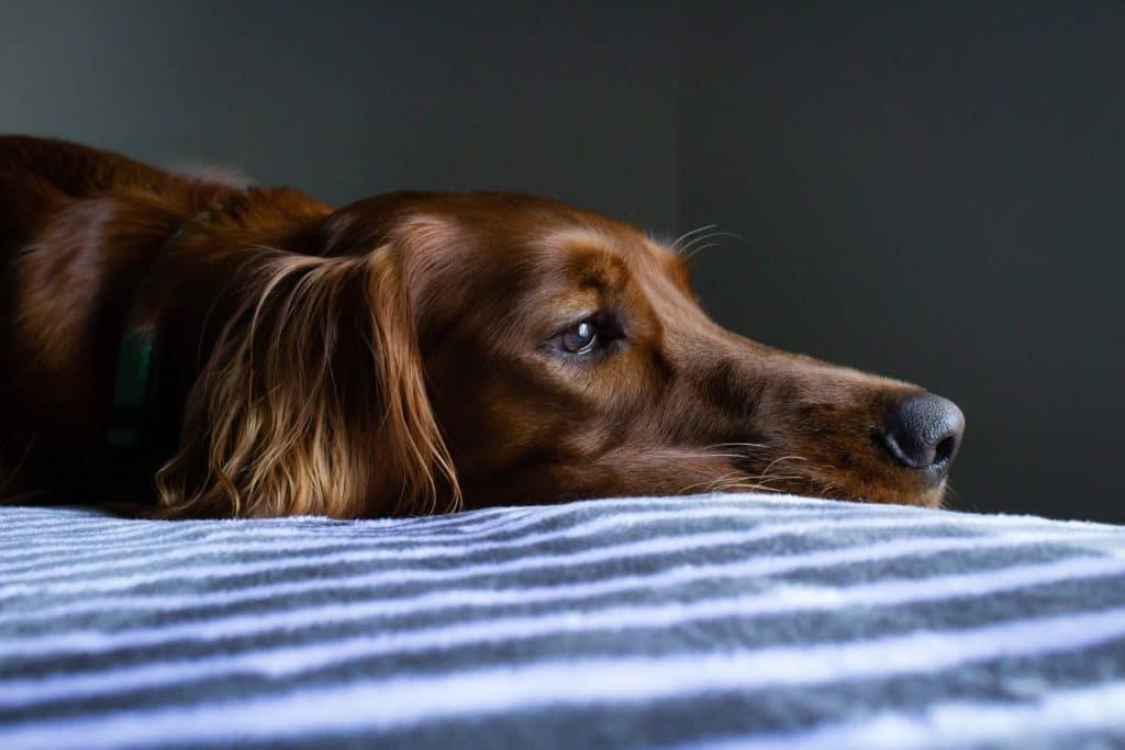 animal-welfare-bill-passed
