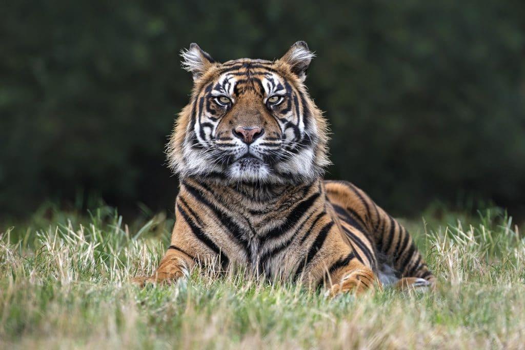 tiger-lodges-west-midland-safari-park
