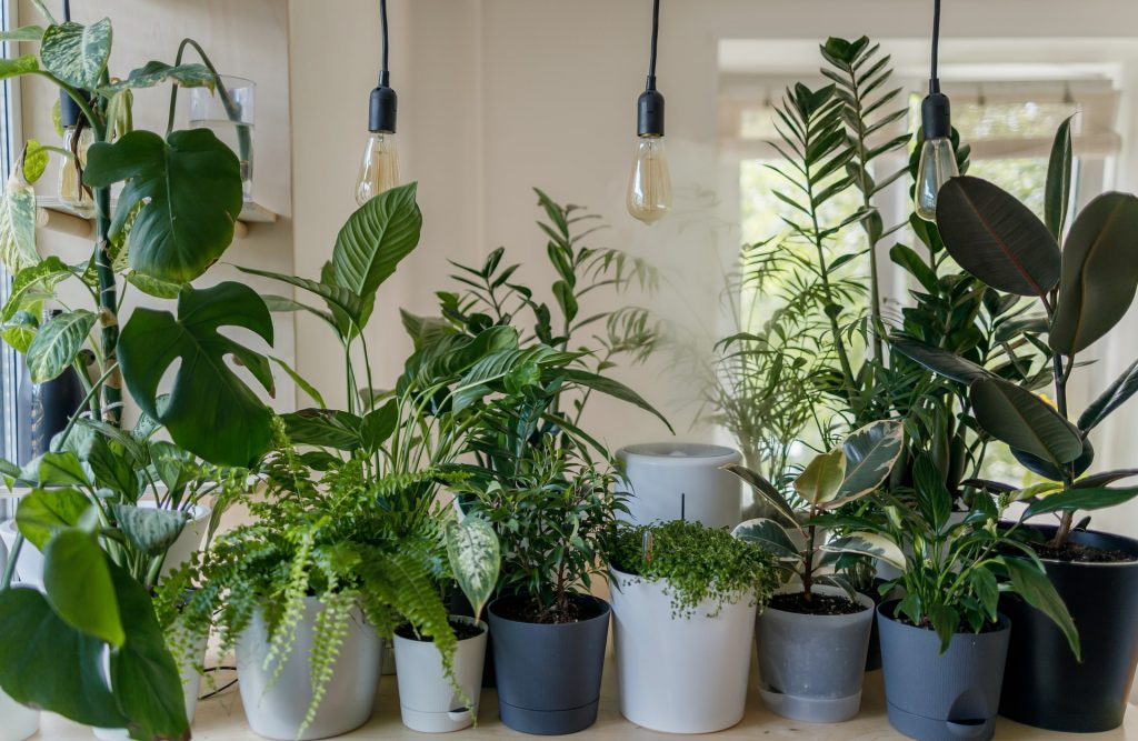 The Jungle Collective's Huge Plant Sale Is Next Weekend, But You'll Need To Do This To Get The Discount