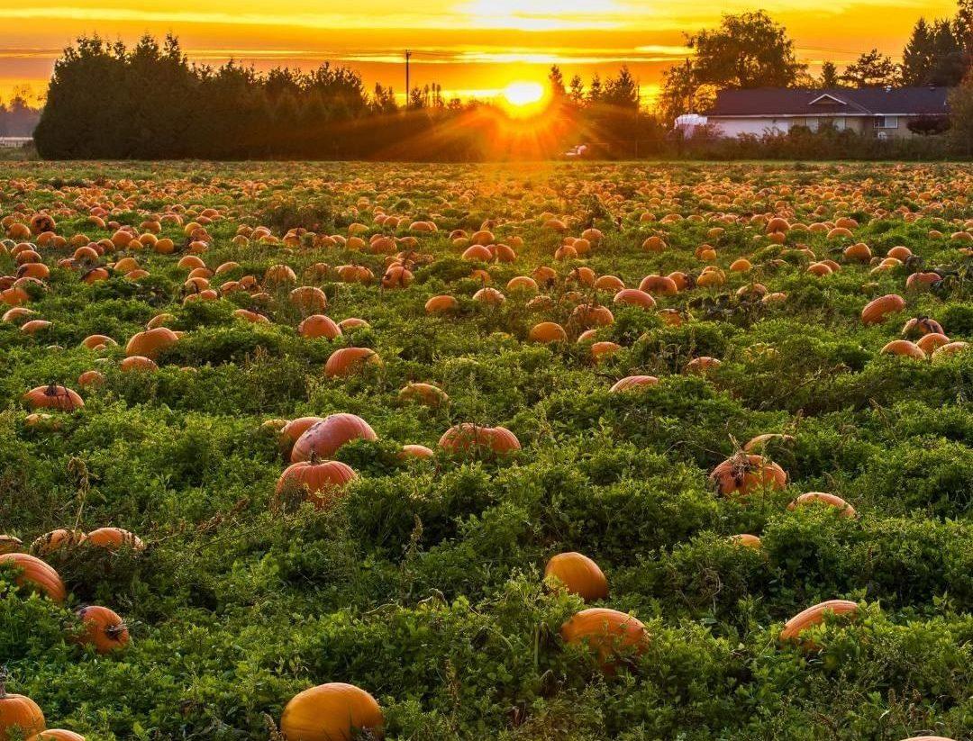 pumpkin picking patch bath
