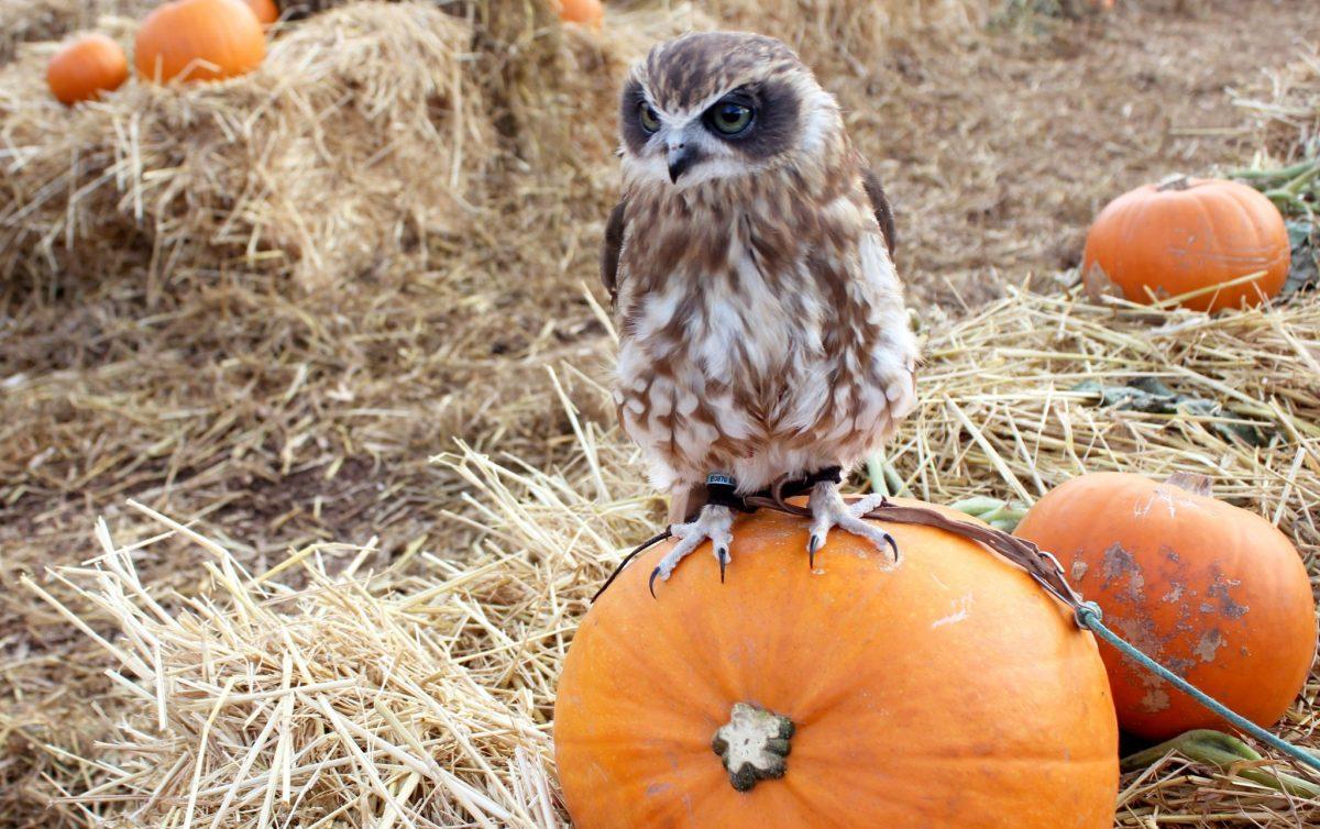 noahs ark zoo pumpkin