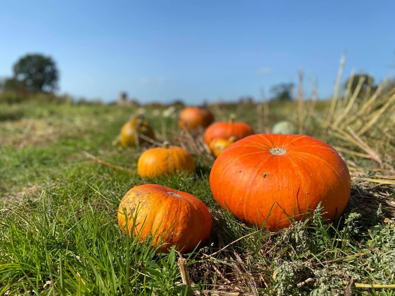 farringtons farm shop pumpkins