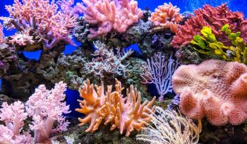 Bleaching Has Halved The Size Of The World's Coral Reefs Since 1995
