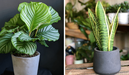 5 Of The Best Shops In Bristol To Feed Your Plant Obsession