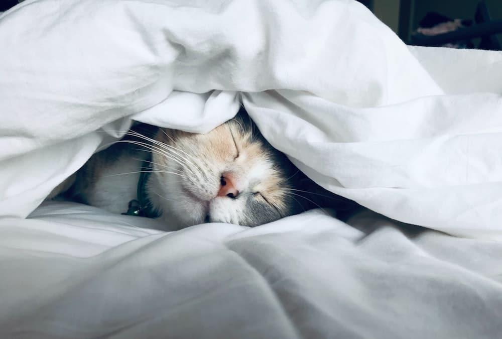 boost-your-mood-sleep-cat