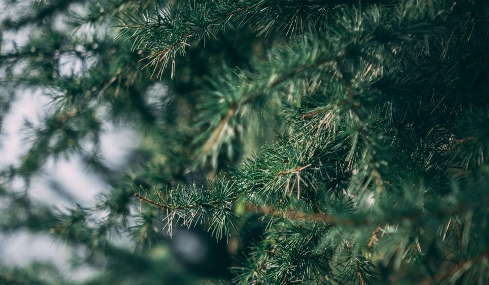 10 Of The Best Places To Buy A Christmas Tree In Bristol