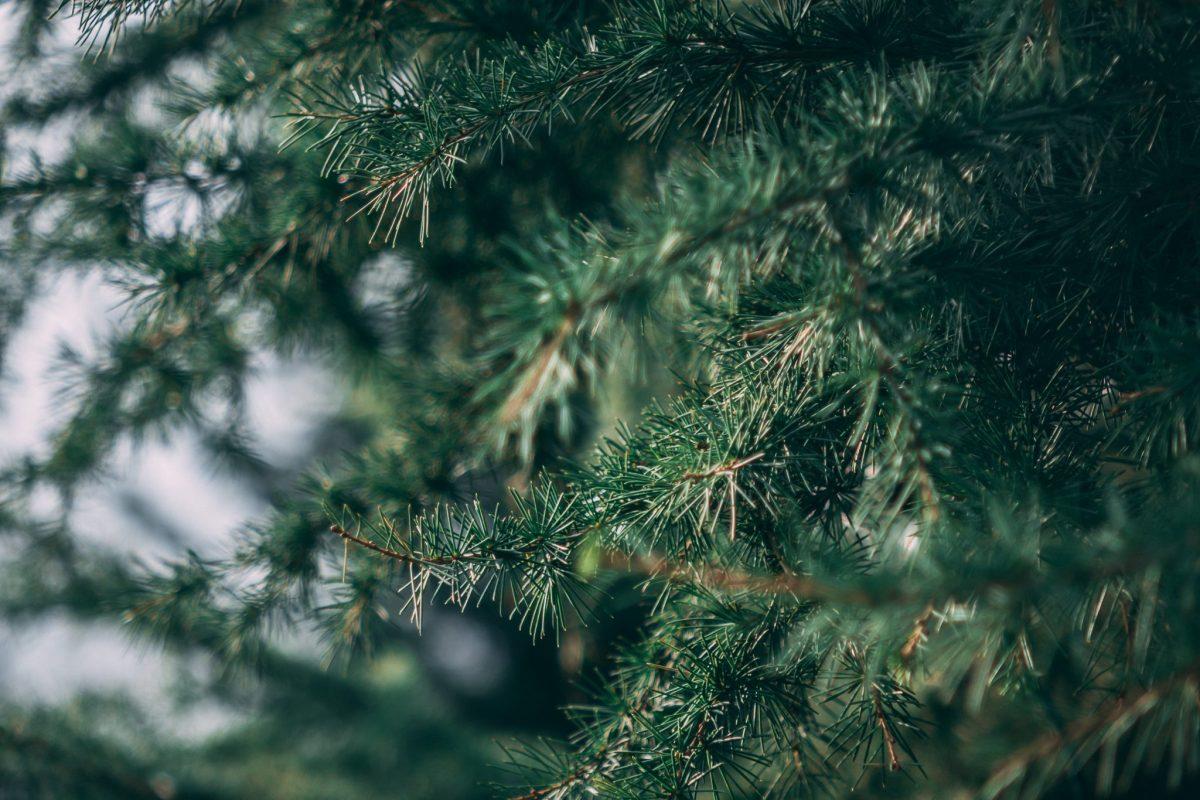 christmas tree bristol